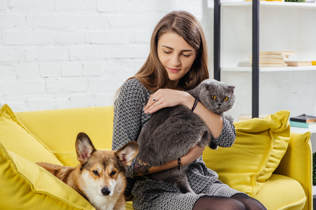 beautiful woman sitting on sofa with pembroke welsh corgi and adorable scottish fold cat Imagens