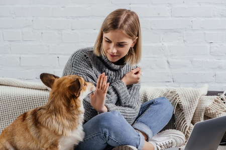 attractive young woman commanding cute pembroke welsh corgi to sit