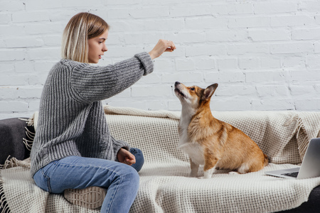 beautiful young woman training adorable pembroke welsh corgi with dog treat