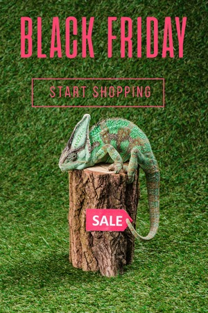side view of beautiful bright green chameleon sitting on stump with sale tag, with black friday - start shopping lettering