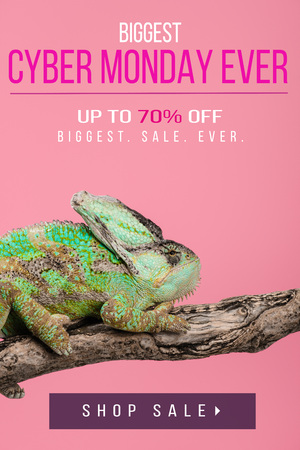 beautiful exotic chameleon sitting on tree branch isolated on pink with cyber monday ever shopping Stock fotó