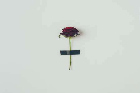 top view of rose with black insulating tape isolated on white