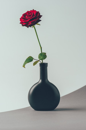 red rose in black vase on gray surface