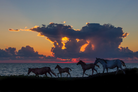 Silhouettes of horses running at seashore at sunset, Georgia