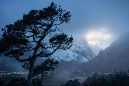 Tree and evening sky with sunlight, Nepal, Sagarmatha. Stock Photo - 112758650