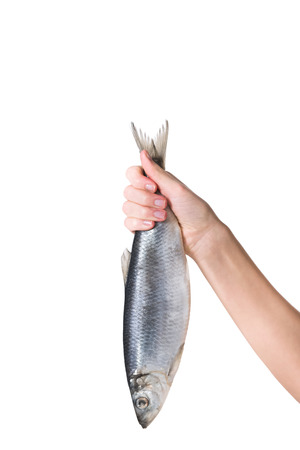Cropped image of woman holding fish in hand isolated on white Banco de Imagens