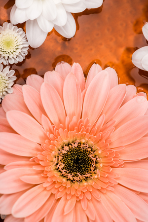 top view of daisies and gerbera flower in metalic plate for spa procedure