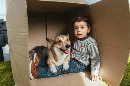 cute little boy with adorable corgi and british longhair cat sitting in cardboard box Reklamní fotografie