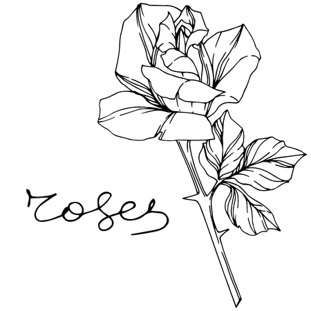 Vector Rose Floral Botanical Flower Black And White Engraved