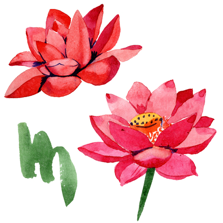 Red lotus. Isolated lotus illustration element. Floral botanical flower. Watercolor background illustration set. Hand drawn in aquarell.