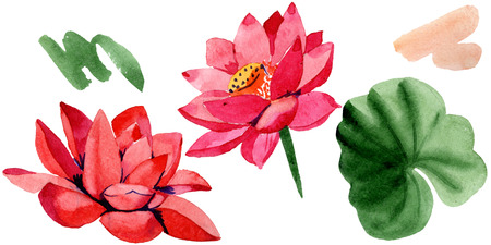 Red lotus. Isolated lotus and green leaf illustration element. Floral botanical flower. Watercolor background illustration set.