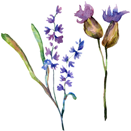 Purple lavender. Floral botanical flower. Wild spring leaf wildflower isolated. Hand drawn lavender flower in aquarelle. Watercolor background illustration set. Banque d'images - 113293261