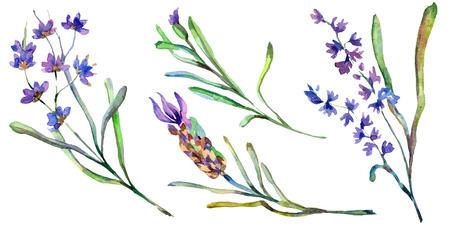 Purple lavender. Floral botanical flower. Wild spring leaf wildflower isolated. Hand drawn lavender flower in aquarelle. Watercolor background illustration set.