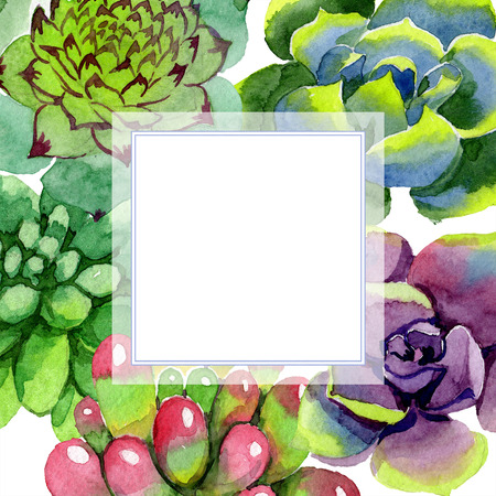 Amazing succulent. Floral botanical flower. Watercolor background illustration set. Frame square. Aquarelle hand drawing succulent. Foto de archivo - 113293799