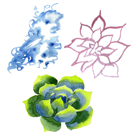 Amazing succulent. Floral botanical flower. Watercolor background illustration set. Aquarelle hand drawing isolated succulent and cloud. Stock Photo