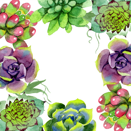 Amazing succulent. Floral botanical flower. Watercolor background illustration set. Floral square frame. Aquarelle hand drawing succulent.