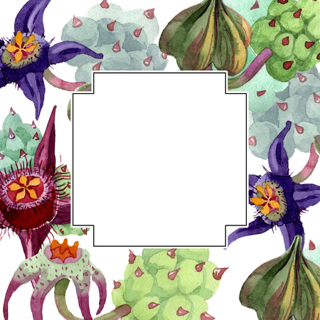 Duvalia flower. Floral botanical flower. Watercolor background illustration set. Geometric frame square. Aquarelle hand drawing succulent.