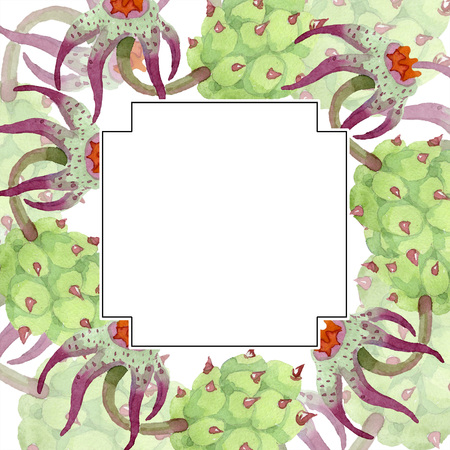 Duvalia flower. Floral botanical flower. Watercolor background illustration set. Geometric frame square. Aquarelle hand drawing succulent. 写真素材 - 113294012