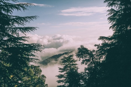 evergreen trees and beautiful mountains with clouds in Indian Himalayas