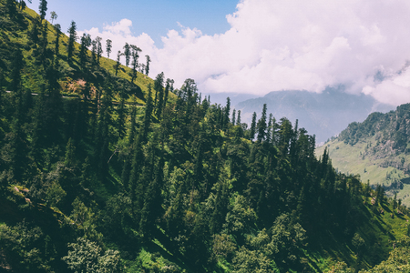 beautiful trees growing in scenic mountains, Indian Himalayas, Rohtang Pass