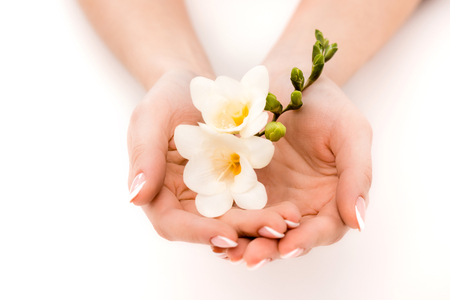 cropped view of hands holding freesia, isolated on white