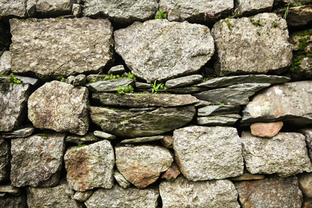 close-up view of stone wall and green plants growing through stones in Indian Himalayas, Dharamsala, Baksu Stok Fotoğraf