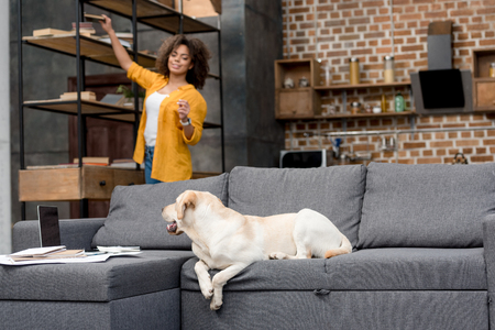 cute labrador lying on couch while his owner taking book from bookshelf Stock Photo