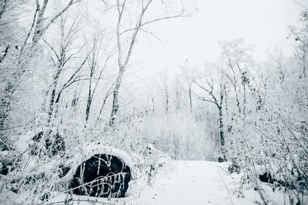 beautiful winter forest under white cloudy sky 스톡 콘텐츠