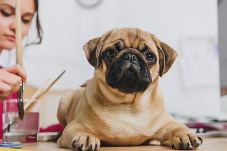 Funny pug dog waiting for female designer to finish drawing