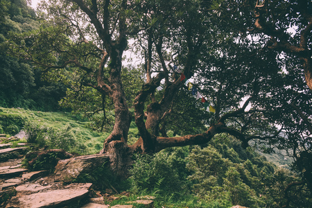 majestic trees and rocky path in Indian Himalayas, Dharamsala, Baksu 스톡 콘텐츠