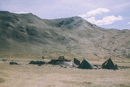 herd of sheep grazing on pasture in rocky mountains and tents, Indian Himalayas, Ladakh