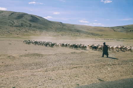 herd of sheep grazing on pasture in rocky mountains, Indian Himalayas, Ladakh Stock Photo