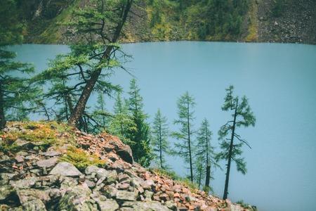 fir trees growing on rocks near beautiful calm mountain lake in Altai, Russia Stock Photo