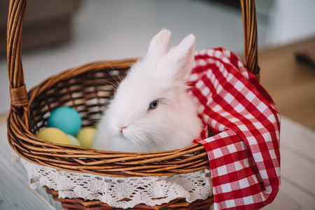 adorable white easter rabbit sitting in basket with colorful eggs Stok Fotoğraf