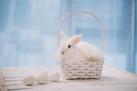 white easter rabbit sitting in small basket with eggs on table Stok Fotoğraf