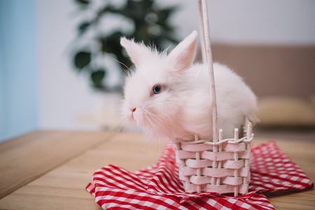 cute white easter rabbit sitting in basket