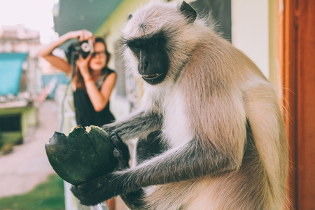 close-up view of funny monkey holding green fruit and girl holding camera behind Stock Photo - 114326472