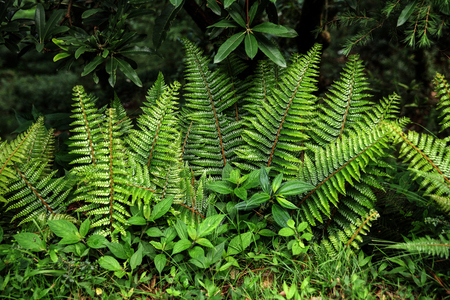 close-up view of beautiful green fern growing in Indian Himalayas, Dharamsala, Baksu 스톡 콘텐츠