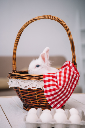 adorable white easter rabbit sitting in basket Stok Fotoğraf - 114330892