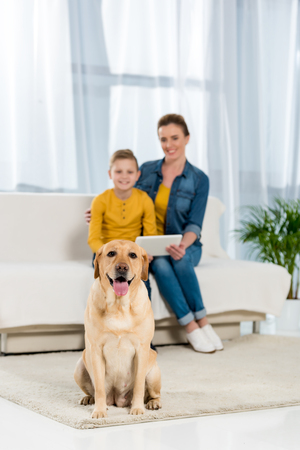 mother and son using tablet together with dog sitting on floor and looking at camera on foreground Stock Photo