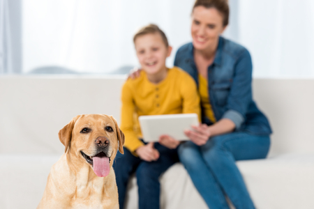 happy mother and son using tablet together with dog sitting on floor on foreground