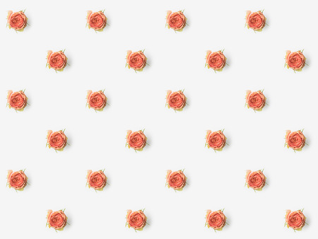 pink flower buds isolated on white Stock Photo