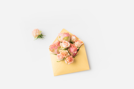 beautiful pink roses in envelope isolated on white