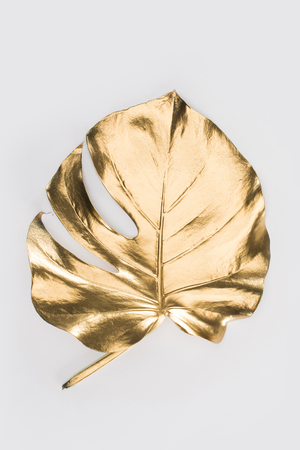 close up view of shiny big golden leaf isolated on grey 写真素材