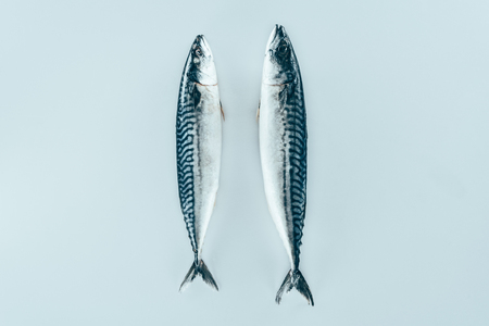 close-up view of raw fresh healthy mackerel fish isolated on grey