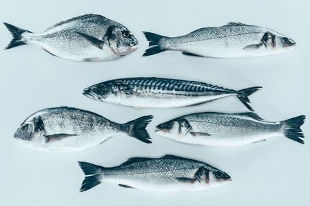 top view of various uncooked sea fish isolated on grey