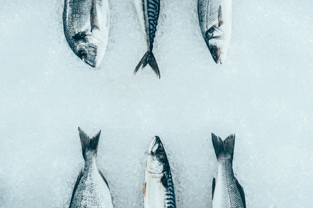 top view of assorted uncooked organic sea fish on ice