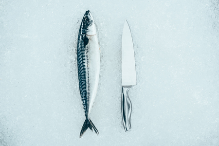 top view of raw fresh mackerel fish and knife on ice