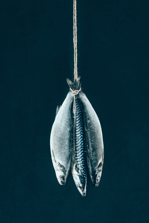 close-up view of uncooked mackerel fish hanging on rope isolated on black Banque d'images