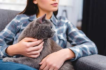cropped shot of woman sitting on couch and stroking british shorthair cat 写真素材
